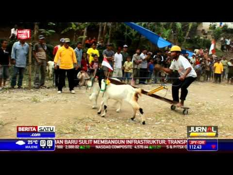 Karapan Kambing Etawa, Tradisi Tahunan di Jombang