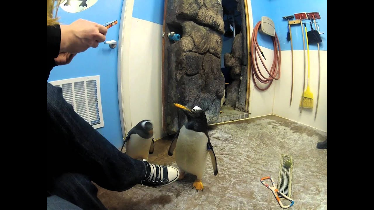 Penguin Encounter At The Living Planet Aquarium In Sandy
