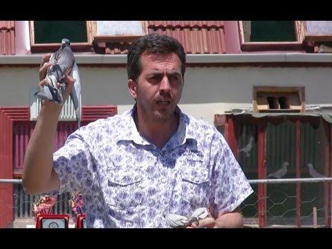 Güvercinlere Fısıldayan Adam -