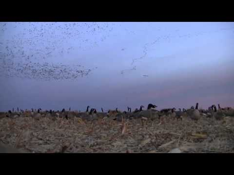 Annual Pierre Youth Goose Hunt