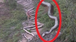 Biggest Snake Ever