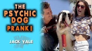 THE PSYCHIC DOG PRANK