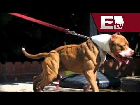Jóvenes usan a pitbull para matar a un perro callejero en Hidalgo / Vianey Esquinca
