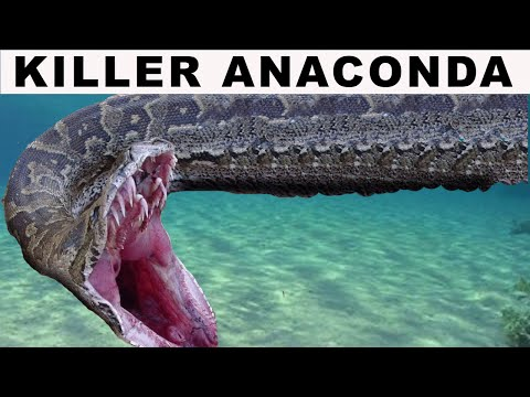 KILLER GREEN ANACONDA