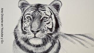 Como dibujar un tigre