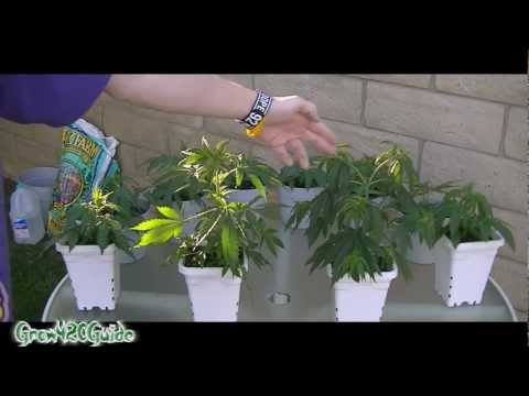 Tutorial: Transplanting into 3 gallon container