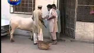 Dailymotion Pakistani Funny Video 3 A Funny Video Rel Page