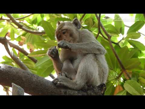 Funny Monkey Worry Is Down | Survival Monkey Daily