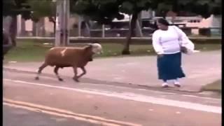 La cabra loca