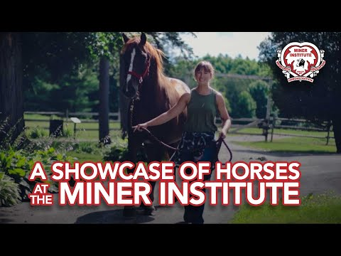 A showcase of horses at the Miner Institute  7-31-20