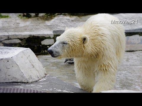 今日のホッケはひんやり半凍り~Polar Bears are eating fish