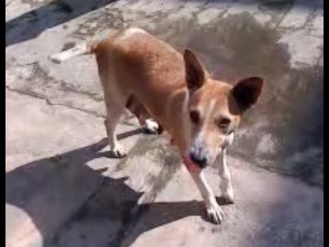 Dog Training Videos How to train your cute little dog * Dog Trainer in Naihati India