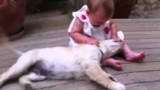 Golden Retriever Puppy Welcomes Adorable 8-Month-Old Girl view on youtube.com tube online.