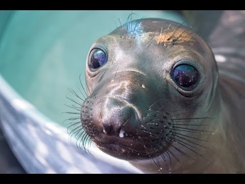 California Wildlife Center Marine Mammal Rescue Team