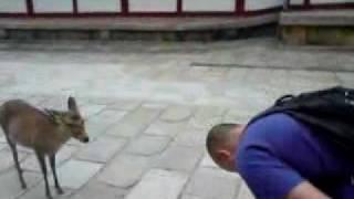 Cum se saluta o caprioara