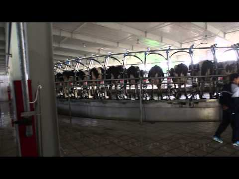 Waikato Milking Systems 2 Side by Side Counter Rotating Milking Platforms for Mengniu, China