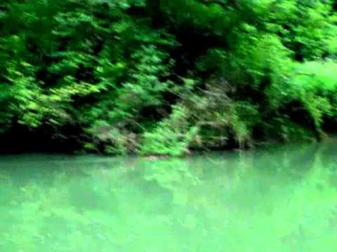 Eurasian Beaver / Evrazijski Bober (Castor Fiber), Krka, Slovenia 2011, Eurasian Beaver / Evrazijski Bober (Castor Fiber), Krka, Slovenia 2011