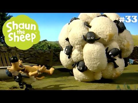 Dính chặt như keo - Những Chú Cừu Thông Minh
