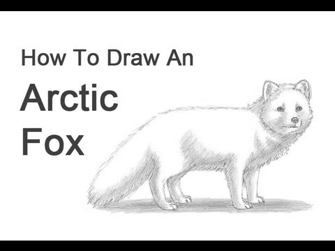 how to draw a arctic fox