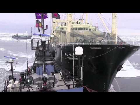 Sea Shepherd Australien startet Operation Relentless