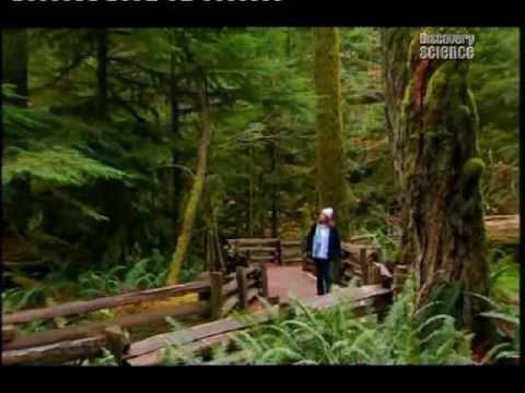 KUCA NA DRVETU-HOUSE ON TREE