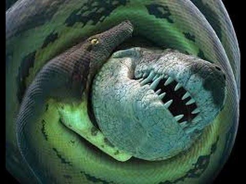Uy lực khủng khiếp của loài rắn lớn nhất lịch sử Trái Đất - Titanoboa