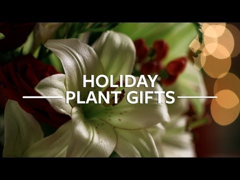 Harry & David Holiday Gift Plants