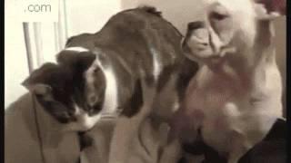 Caídas de animales