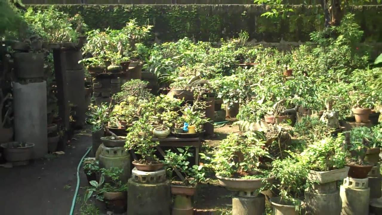 Bonsai Tree Garden In The Philippines Youtube