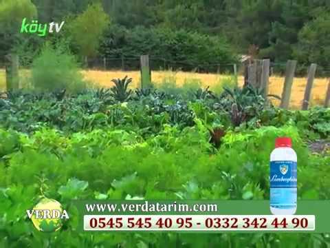 Hümik +Fulvik Asit (sıvı organik gübre )