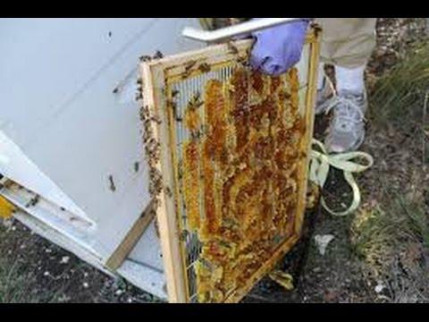 Beekeeper uses Queen Excluders or not in Honey Bees in Bee Hive