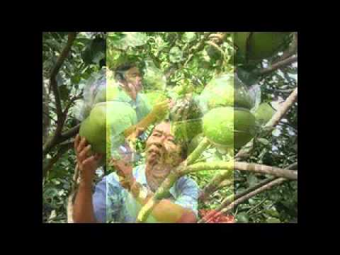 Nhac xuan tuyen chon 'hay nhat' 2013, Tet Nguyen Dan - VMusic