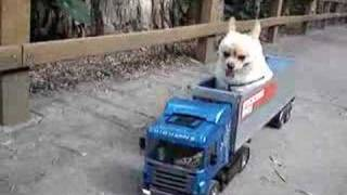 My Dog In The Scania R470 Tractor Truck