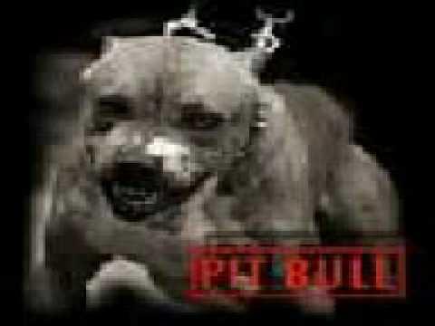 German Rottweiler vs Pitbull