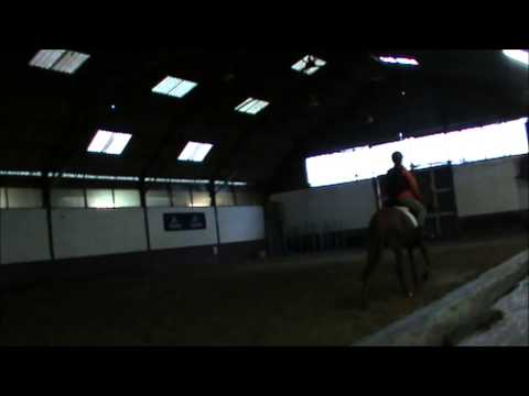 My arabian horse Sadiq