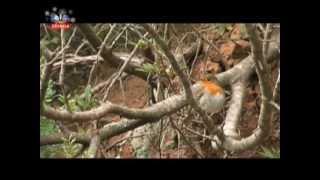 Vida Selvagem Arrábida, Portugal.avi