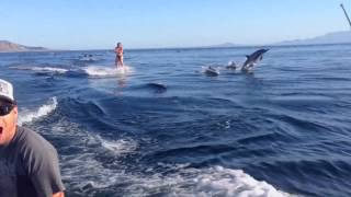 Girl Wakeboards With Dolphins