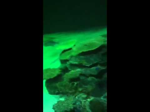 Las vegas MGM aquarium