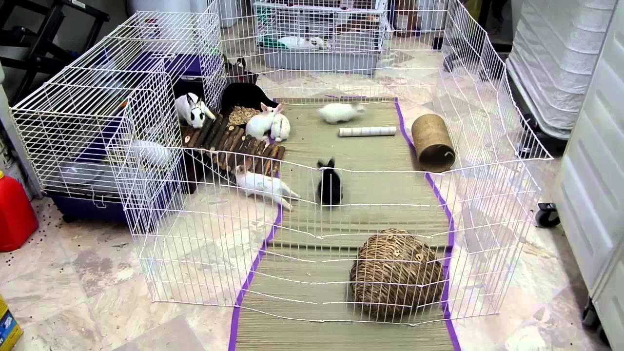 Image Result For Can A Small Dog Live In A Room