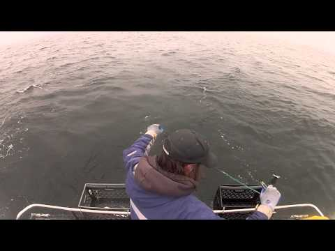 Opening Week: Commercial Salmon Season 2013