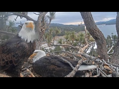 Big Bear Eagles ~ FUNNY SHADOW! Lays A STICK on Jackie's Back To Get Egg Time! 1.20.20