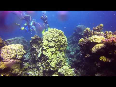 Diving trip ( Jeddah , red sea )