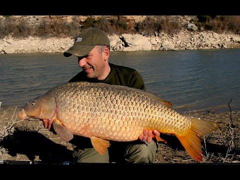 Lov kaprov na Rio Ebro !