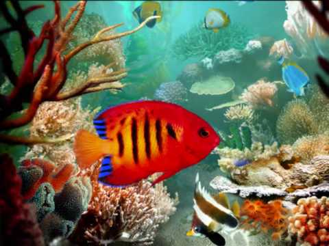 aquarium charles camille sa 235 ns carnival of the animals