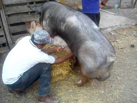 A pesar de que la carne de cerdo es la de mayor consumo a nivel mundial (14 kg