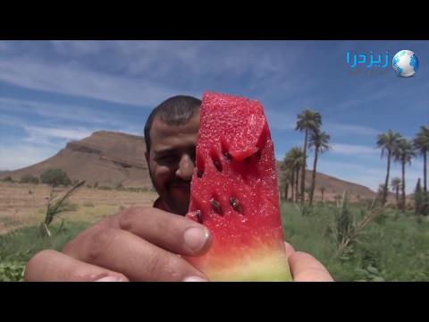 البطيخ الاحمر بألنيف جودة في المنتوج وإكراهات الجفاف