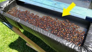 Man Built This Trap In His Backyard, And It's Disgusting How Well It Works