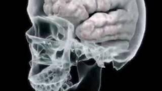 Your Brain On Drugs Hydrocodone (College Health Guru