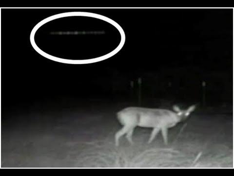 Deer ufo encounter deer caught in alien headlights mesmerizes ufo