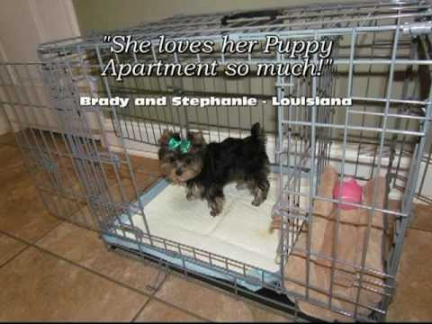 puppy apartment reviews youtube